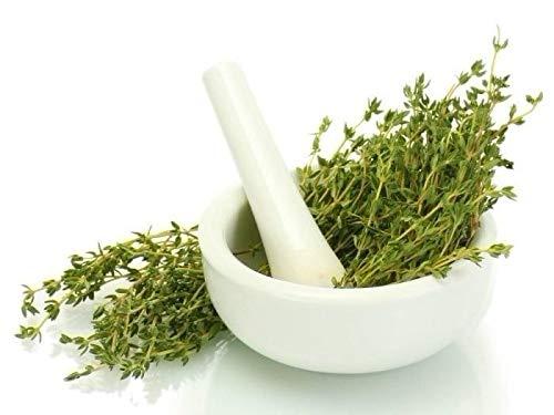 Thyme herb Kitchen Garden Patio EU Standard Indoor Outdoor Seeds UK (Best Outdoor Seeds Uk)