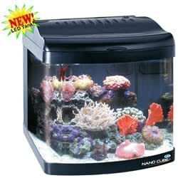 Amazon Com Jbj 24 Gallon Nano Cube Deluxe Style Aquarium