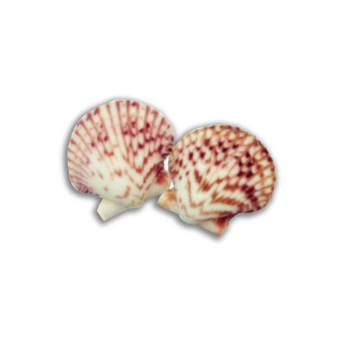 (T-Rex Crab Island Shell Dishes by)