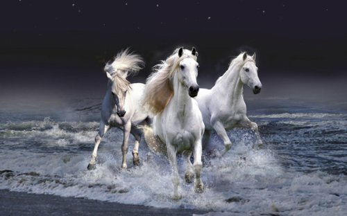BEAUTIFUL HORSES running in SURF poster white STALLIONS ocea