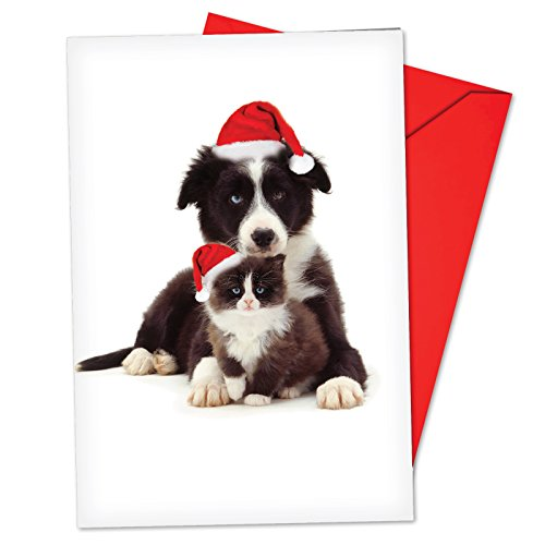 12 'Copy Cats Border Collie' Boxed Christmas Cards with Envelopes 4.63 x 6.75 inch, Funny Puppy and Kitty Christmas Notes, Holiday Dog and Cat Cards, Adorable Christmas Stationery B6596GXSG ()