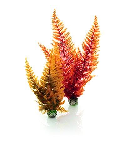 biOrb Autumn Fern Plants - 2 Pack