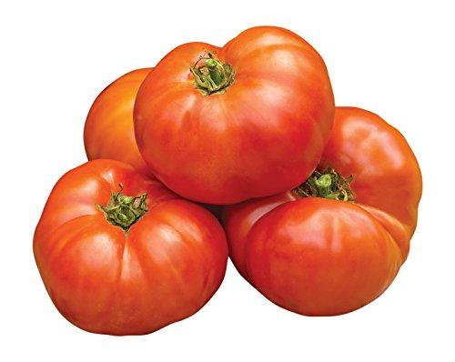Burpee Jersey Boy Beefsteak Tomato Seeds 25 (Jersey Tomatoes)