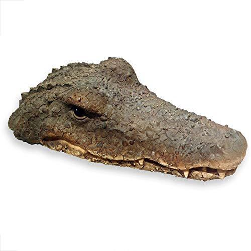 WHW Whole House Worlds Floating Crocodile Head, Garden Art or Decoy for Water, Pools and Ponds, 1 ft 5/8-Inch-long (32cm)