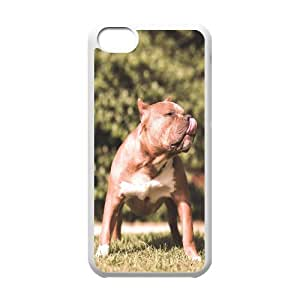 Beautiful Dog IPhone 5C Cases, Iphone 5c Cases for Girls with Designs Cute Design Cheap Okaycosama - White