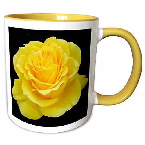 3dRose Taiche - Photography - Yellow Rose - Yellow Rose Close up photograph ofyellow rose of texas isolated on black background - 15oz Two-Tone Yellow Mug (mug_128284_13)