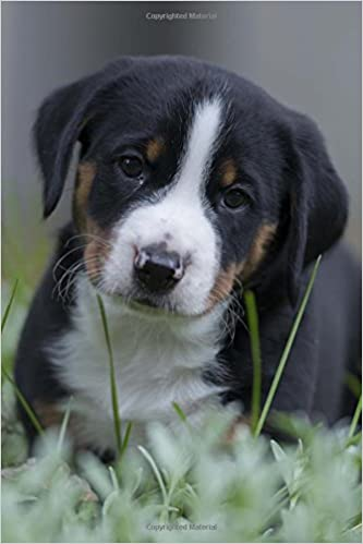 Buy Totally Adorable Swiss Mountain Appenzeller Puppy Dog Pet Journal Book Online At Low Prices In India Totally
