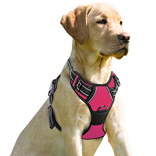 The best no pull dog harness