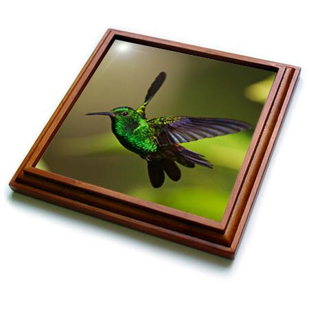 3dRose trv_277172_1 Copper Rumped Hummingbird Flying Trivet with Tile, 8 by 8''
