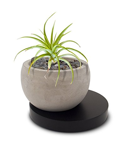 23 Bees Succulent, Cactus Concrete Planter Pot with Black Wooden Base | Decorative Air Plant Tillandsia Holder Bowl | Round Modern Contemporary Mini Container for Small Indoor Plants/Flowers (1 Pot)
