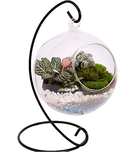 - 10L0L Charming Clear Hanging Glass Ball Vase Air Plant Terrarium Kit/Succulent Flowerpot Container w/Black Metal Stand (Big)