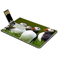 Luxlady 32GB USB Flash Drive 2.0 Memory Stick Credit Card Size Atlantic Puffin standing in grass Iceland IMAGE 20479452