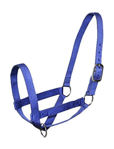 Derby Nylon Cattle Halters Barn and Turnout in Calf, Cow, Heifer, Steer, Newborn Sizes -