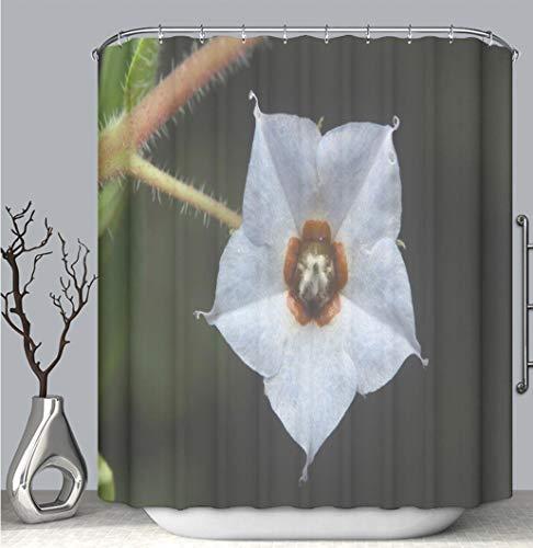 BEICICI Color Shower Curtain Liner Anti-Mildew Antibacterial, Flower Unidentified Aarey Milk Colony India Multi-Color,Custom Shower Curtain Bathtub Bathroom Accessories.