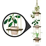 23 Bees, Macrame Hanging Planter with Terra Cotta