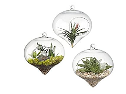 Amazon Pack Of 3 Glass Hanging Planter Hanging Air Plant