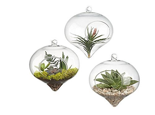 Pack of 3 Glass Hanging Planter Hanging Air Plant Terrarium Decorative Hanging Plant Pots Flower Pots Plant Containers Air Plant Pots Hanging Air Fern Plant Container Fern Plant Pot Fern Terrarium]()