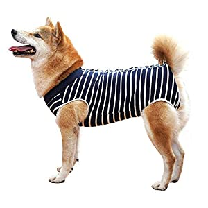 Due Felice Dog Professional Surgical Recovery Suit for Abdominal Wounds Skin Diseases, After Surgery Wear, E-Collar Alternative for Dogs, Home Indoor Pets Clothing 50