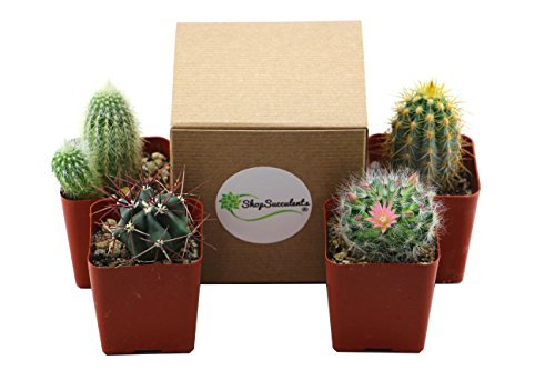 Saguaro Cactus (Shop Succulents Pack of Assorted 2.5