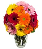 Rainbows are a beautiful symbol of love and gratitude, send one today with our Gerbera Daisy Rainbow Bouquet. Arranged with fresh daisies in every color from yellow to pink and red. Daisies are a popular flower to send through-out the year to...