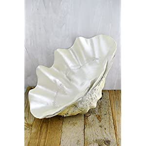 "Large Polyresin Half Charm Shell 17.5"" x 10"" - Excellent Home Decor - Indoor & Outdoor 84"