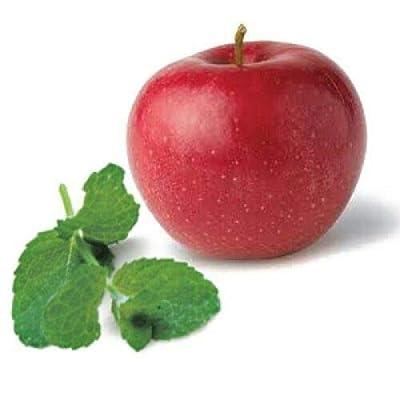 Grandiosy Apple Mint 1000 Seeds HERB Medicinal AROMABUTTERFLY MAG : Garden & Outdoor
