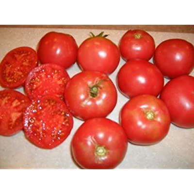 Fresh Heirloom Tomato Arkansas Traveler - 100 Seeds - Heat Tolerant - Crack Disease Resistan : Garden & Outdoor