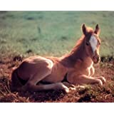 "50"" x 80"" Blanket Comfort Warmth Soft Plush Throw for Couch Horse Colt Farm Animal Picture Foal"