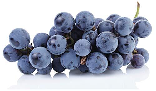 Heirloom Concord Grape Certified 10 Seeds #32009 Item UPC#637632549050