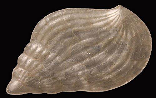 Capiz Shell Bojong Tray (Capiz Shell Plate)