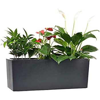 Amazon.com : Self Watering Planter by MyEasygro for Indoor