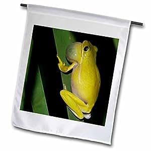 Danita Delimont - Frogs - Green Treefrog, Welder Wildlife Refuge, Texas - NA02 RNU0633 - Rolf Nussbaumer - 12 x 18 inch Garden Flag (fl_84521_1)