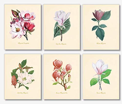 (Botanical Prints Wall Art - Vintage Magnolia Floral Decor - (Set of 6) - 8x10 - Unframed)