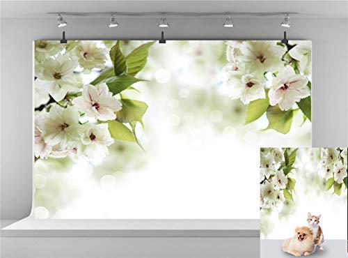 E00t00 White Flower Blossom Photography Background Spring