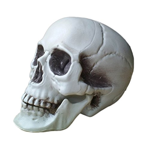 Price comparison product image Dutch Brook Fake Human Skull Skeleton Head Halloween Prop Decoration