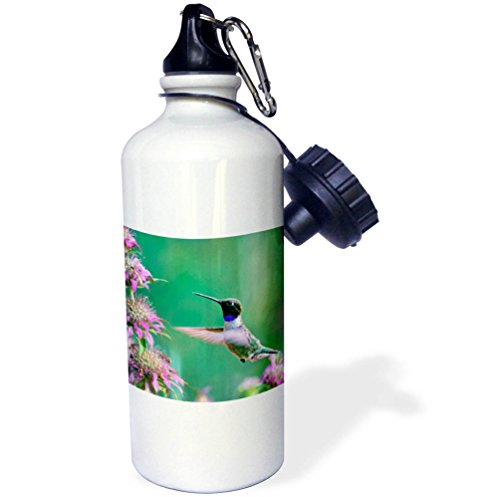 3dRose Danita Delimont - Hummingbirds - Black-chinned Hummingbird drinking nectar at a bee balm, Texas, USA.   - 21 oz Sports Water Bottle (wb_260182_1)