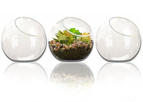 NeutralPure ECO Tabletop Glass Plant Terrarium (3 Pcs)