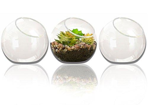 NeutralPure ECO Tabletop Glass Plant Terrarium (3 Pcs) by NeutralPure ECO