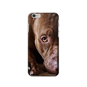 PitBull Facees Case Cover For SamSung Galaxy Note 2 fashion design image custom es case,durable Case Cover For SamSung Galaxy Note 2 hard 3D Case Cover For SamSung Galaxy Note 2 Case Cover For SamSung Galaxy Note 2 Full Wrap Case