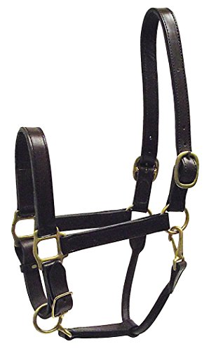(Hamilton 1-Inch Adjustable Leather Deluxe Halter with Snap, Average Size, Fits 800 to 1100-Pound, Havana)