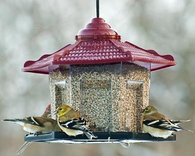 Audubon Gazebo Bird Feeder (Pagoda Feeder)