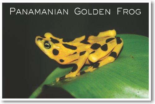 Panamanian Golden Frog - NEW Animal Wildlife Poster (Panamanian Golden Frog)