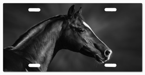 horse-breed-g5v4-vanity-license-plate