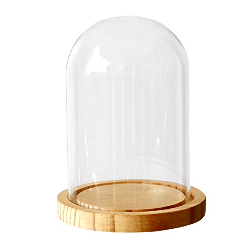 Ivolador Glass Display Cloche Dome with Wood Base Office Home Decoration