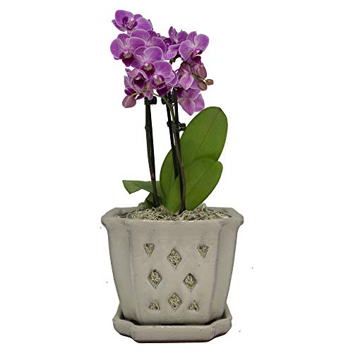 TRENDSPOT 5IN Orchid Pot Square, Crackle White Indoor Planter, 5 inch