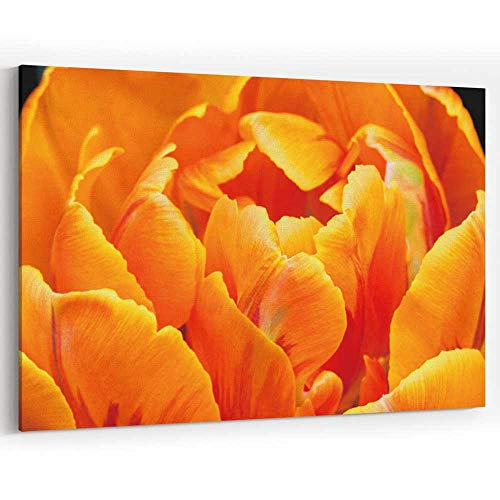 Close up of Orange Color Double Early Tulip Canvas Art Wall Dector for Modern Home Decor