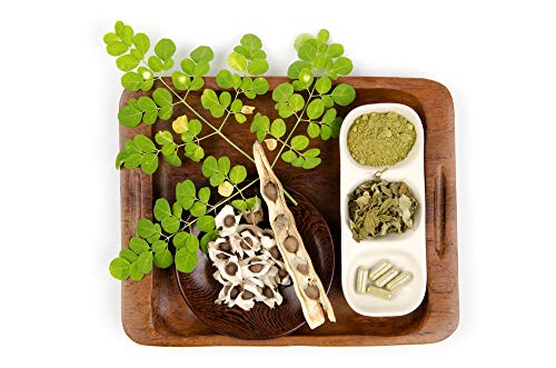 250 Seeds of Natural Moringa Oleifera Drumstick Tree, Horseradish Tree, Mother's Best Friend, Radish Tree Seeds (250+ Fresh Hand Picked Seeds for Sowing Will be - Tree Horseradish