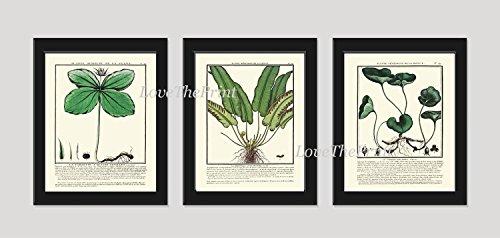 Botanical Print Set of 3 Antique Beautiful Green Nature Plants Bulbs Antique Chart Home Room Decor Wall Art Unframed (Modern Sunroom Ideas)
