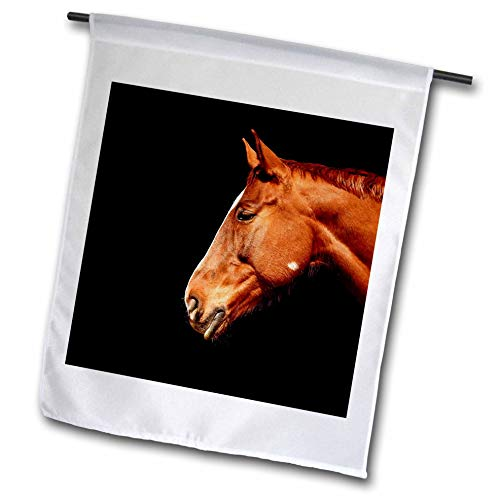 3dRose Sven Herkenrath Animal - Portrait Of An Elegant Horse On Black Background Animal Photography - 12 x 18 inch Garden Flag (fl_288283_1)