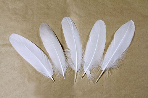 Goose feather,Hgshow 100Pcs beautiful feathers 6-8 inches 15-20